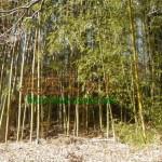 竹やぶ大掃除3~作業の基本