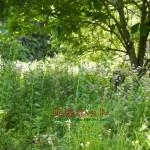 歴代住職旧墓地の草刈り墓参