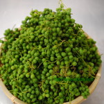 実山椒の収穫