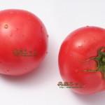 新型インフルエンザをふっとばせ トマトのリコピン効果で免疫力を高めよう