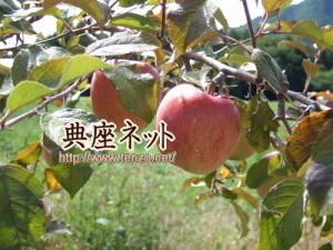 リンゴのごま和合