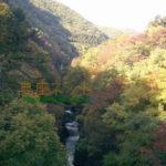 続・吹割の滝紅葉情報_11月1日現在